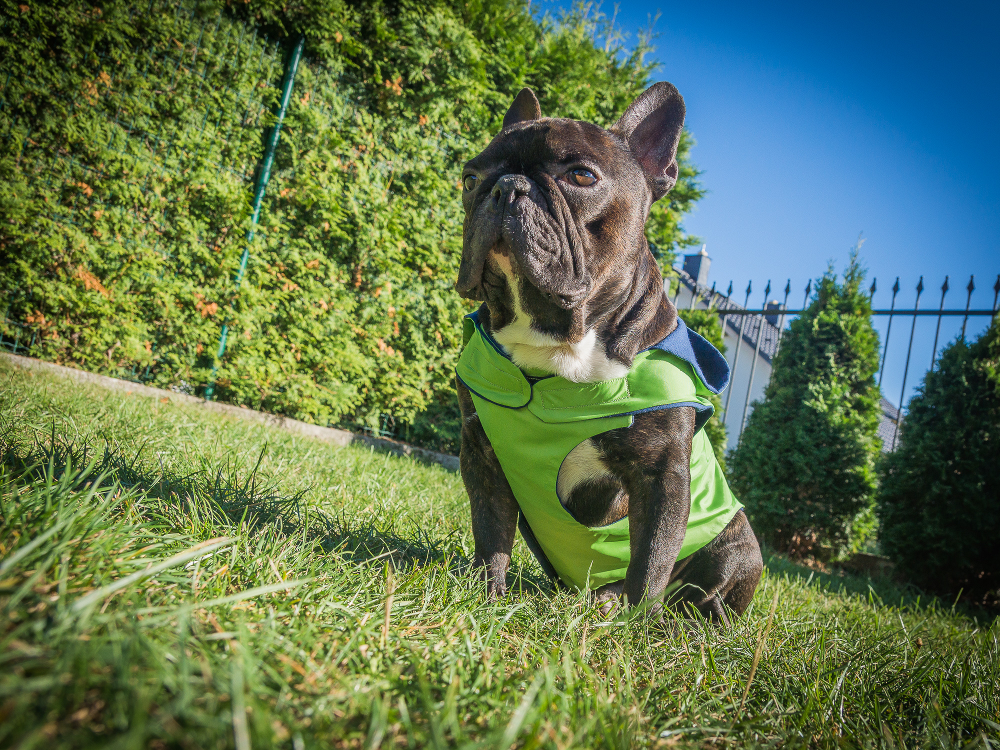 kurtka przeciwdeszczowa Frenczi ubranka dla psów