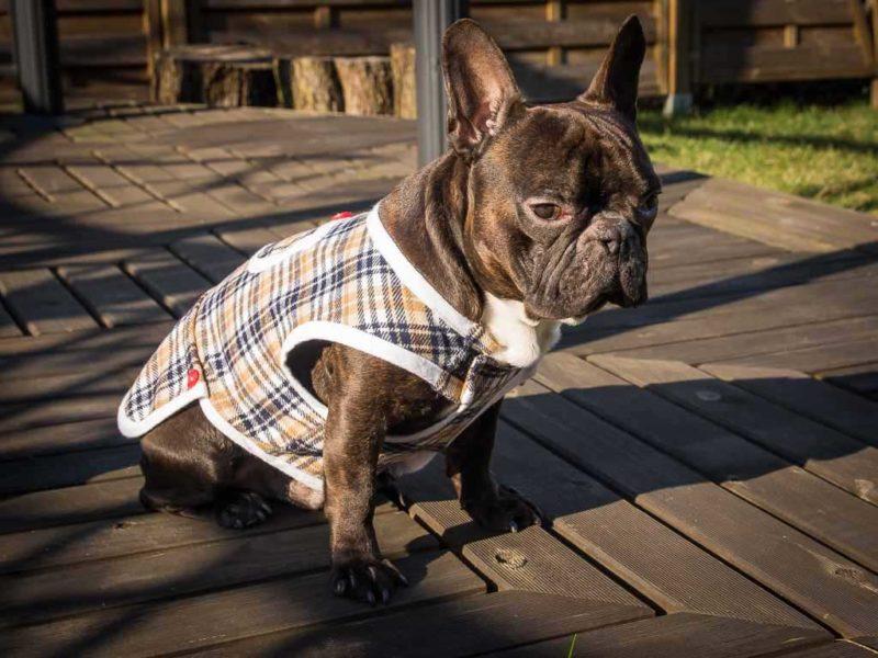frenczi - ubranka dla psa sklep rozmiary kubrak wełniany dla psa