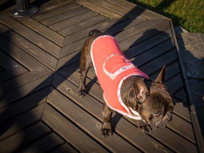frenczi - ubranka dla psa sklep rozmiary kubrak polarowy
