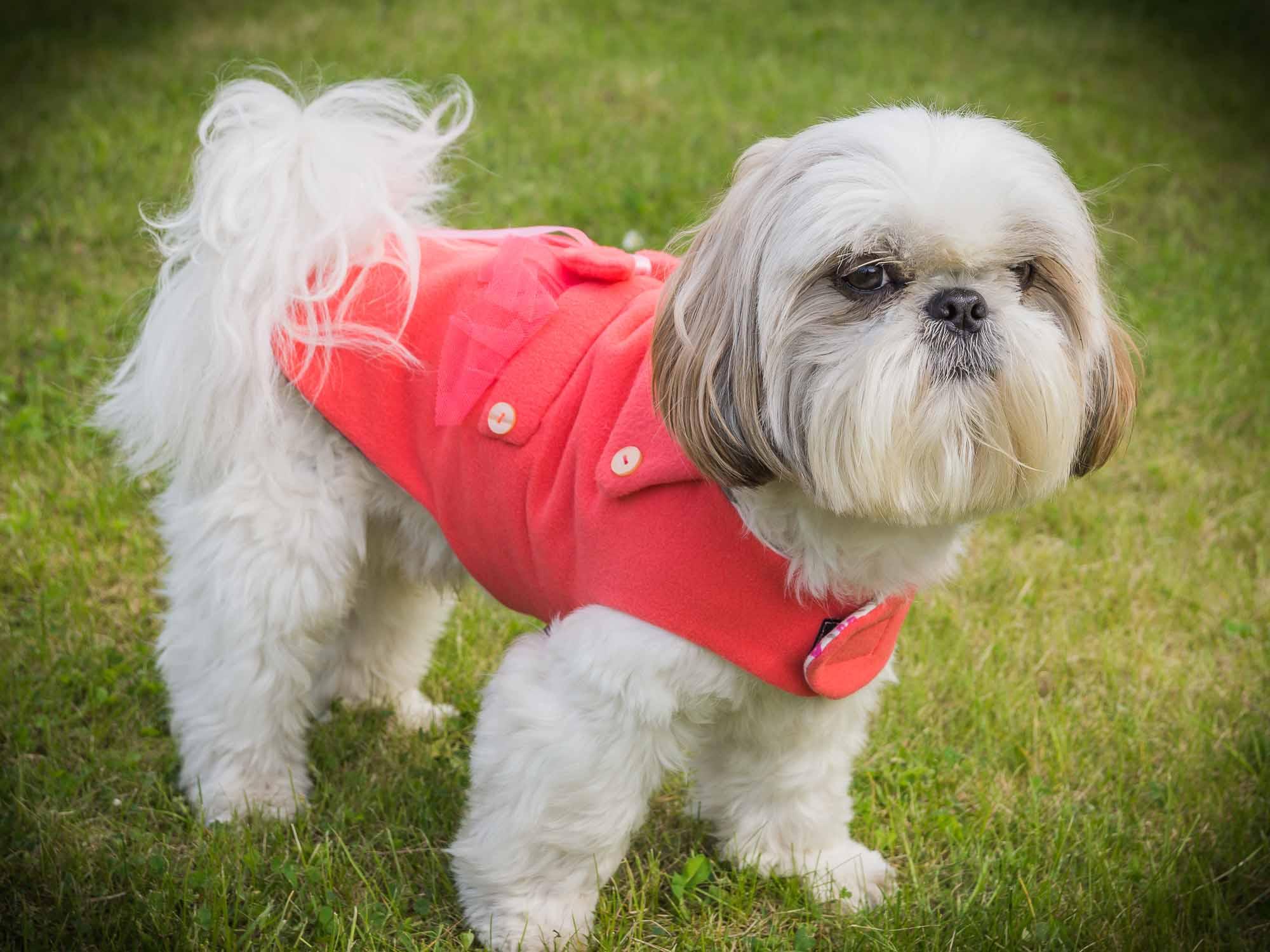 kubrak frenczi sklep ubranka dla psów
