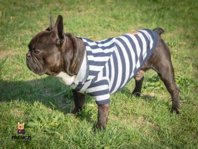 koszulka dla psa frenczi bawełna różne wzory