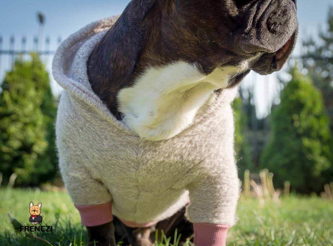 sweter wełniany wełna frenczi dla psów