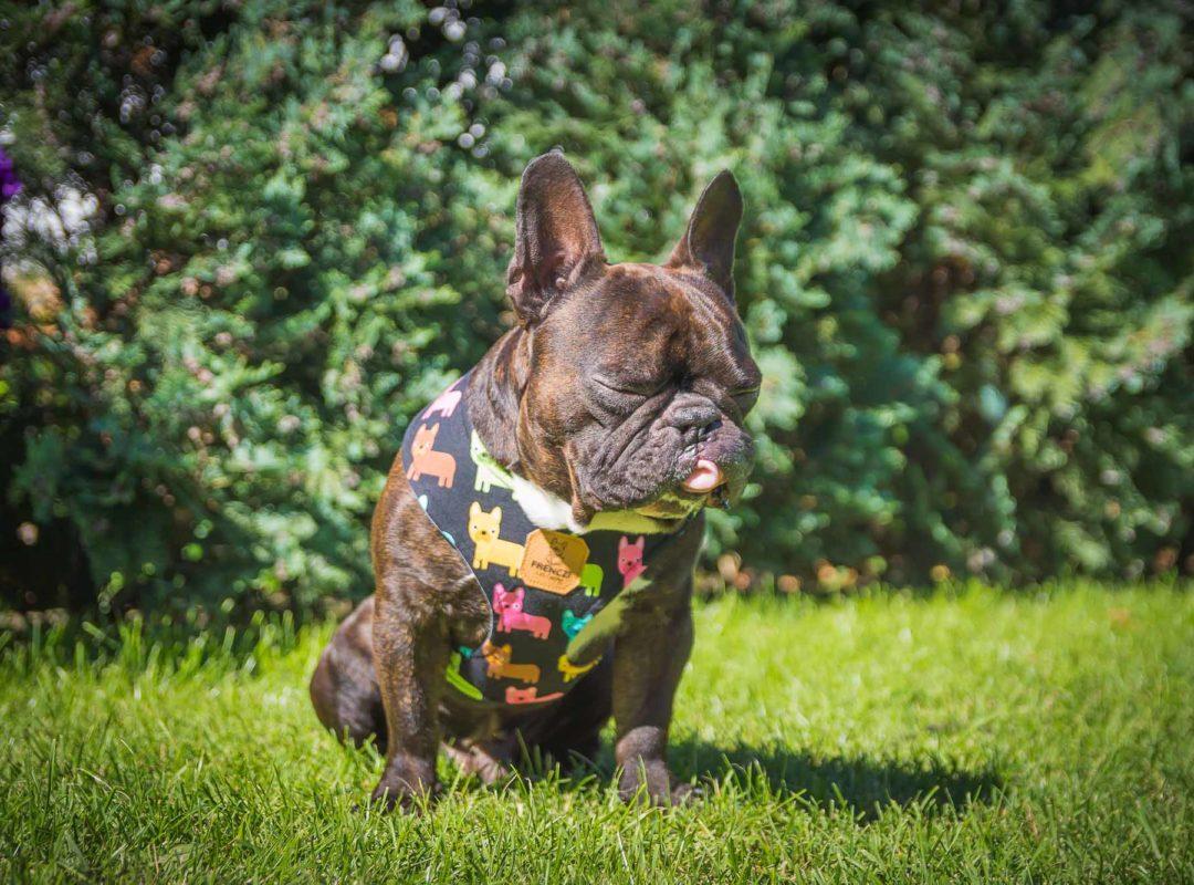 szelki frenczi bezuciskowe do auta transport psa