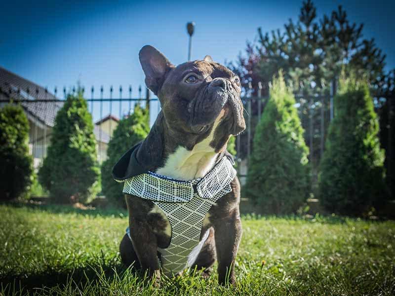 kurtka jesienna Frenczi ubranka dla psów