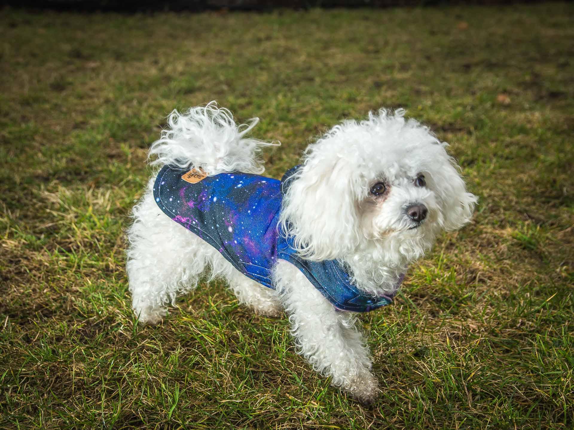 kurtka wiosenna Frenczi ubranka dla psów