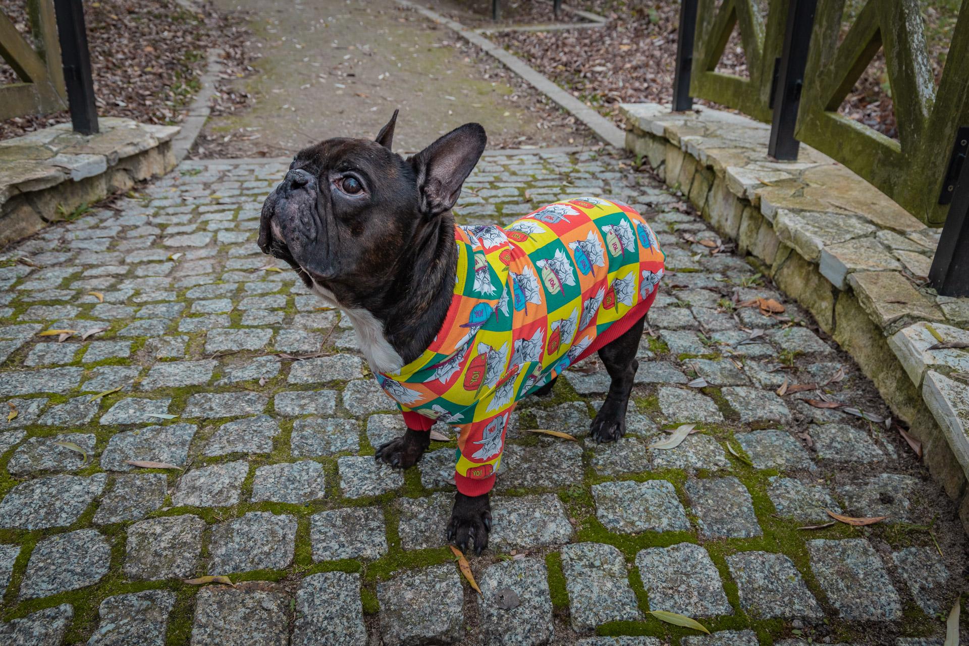 bluza Frenczi ubranka dla psów