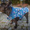 Kurtka zimowa Frenczi ubranka dla psa softshell buldog mops shih-tzu chihuahua