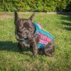 Kurtka przeciwdeszczowa dla psa marki Frenczi. Zdjęcieubranka dla psa na miarę. Wzór kolorowa jodełka.