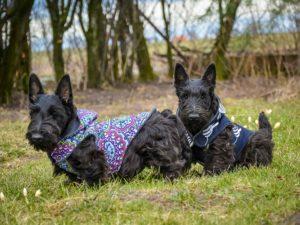 kurtka przejściowa Frenczi ubranka dla psów
