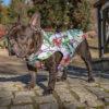 Kurtka przeciwdeszczowa dla psa marki Frenczi. Zdjęcieubranka dla psa na miarę. Wzór Flamingi.