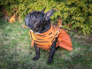 tiulowa sukienka Frenczi ubranka dla psów