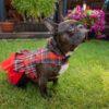 Tiulowa sukienka dla psa w czarno-czerwoną kratę