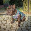 Kurtka przeciwdeszczowa dla psa marki Frenczi. Zdjęcieubranka dla psa na miarę. Wzór Pawie Pióra.
