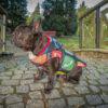 Kurtka przeciwdeszczowa dla psa marki Frenczi. Zdjęcieubranka dla psa na miarę. Wzór Smartdog z ikonami aplikacji ze smartfona.