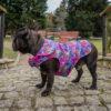 Kurtka przeciwdeszczowa dla psa marki Frenczi. Zdjęcieubranka dla psa na miarę. Wzór Bright flowers