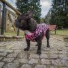 Kurtka przeciwdeszczowa dla psa marki Frenczi. Zdjęcieubranka dla psa na miarę. Wzór Valentines