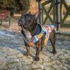 Kurtka przeciwdeszczowa dla psa marki Frenczi. Zdjęcieubranka dla psa na miarę. Wzór Komiks