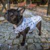 Kurtka przeciwdeszczowa dla psa marki Frenczi. Zdjęcieubranka dla psa na miarę. Wzór Lamy