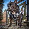 Kurtka przeciwdeszczowa dla psa marki Frenczi. Zdjęcieubranka dla psa na miarę. Wzór Moro szare