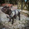 Kurtka przeciwdeszczowa dla psa marki Frenczi. Zdjęcieubranka dla psa na miarę. Wzór Moro khaki.