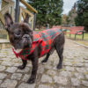 Kurtka przeciwdeszczowa dla psa marki Frenczi. Zdjęcieubranka dla psa na miarę. Wzór Krata