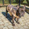 Kurtka przeciwdeszczowa dla psa marki Frenczi. Zdjęcieubranka dla psa na miarę. Metalizowany różowo-złoty ortalion
