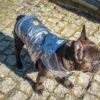 Kurtka przeciwdeszczowa dla psa marki Frenczi. Zdjęcieubranka dla psa na miarę. Srebrny metalizowany ortalion