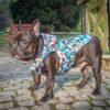 Kurtka przeciwdeszczowa dla psa marki Frenczi. Zdjęcieubranka dla psa na miarę. Wzór Piksele