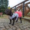Tiulowa kurtka przeciwdeszczowa dla psa marki Frenczi. Zdjęcieubranka dla psa na miarę.