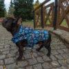 Kurtka przeciwdeszczowa dla psa marki Frenczi. Zdjęcieubranka dla psa na miarę. Wzór Mexican skulls
