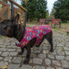 Kurtka przeciwdeszczowa dla psa marki Frenczi. Zdjęcieubranka dla psa na miarę. Wzór Dia de los Muertos