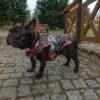 Kurtka przeciwdeszczowa dla psa marki Frenczi. Zdjęcieubranka dla psa na miarę. Wzór Tajemniczy ogród