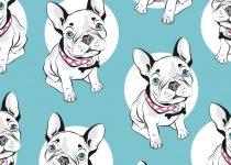 koszulka frenczi ubranka dla psa